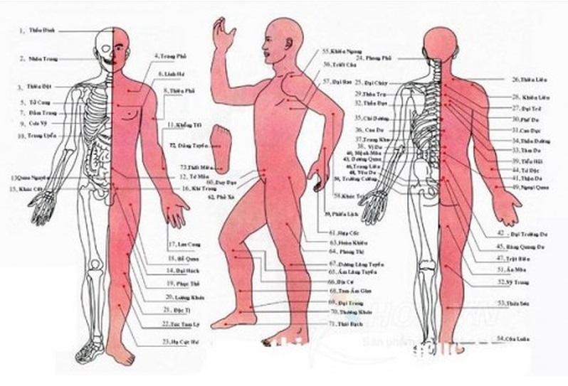 Bản đồ huyệt đạo cơ thể người